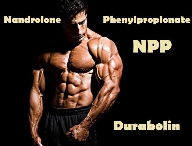 Nandrolone-phenylpropionate