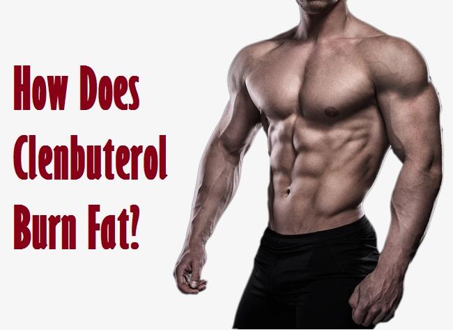 How Does Clenbuterol Burn Fat